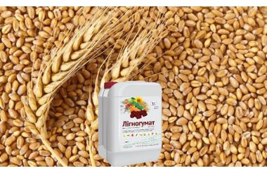 Технология применения Лигногумата на озимых и ярых зерновых культурах